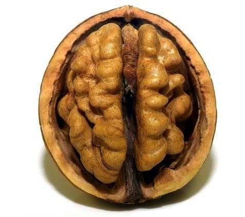 Food for the Brain - Walnuts