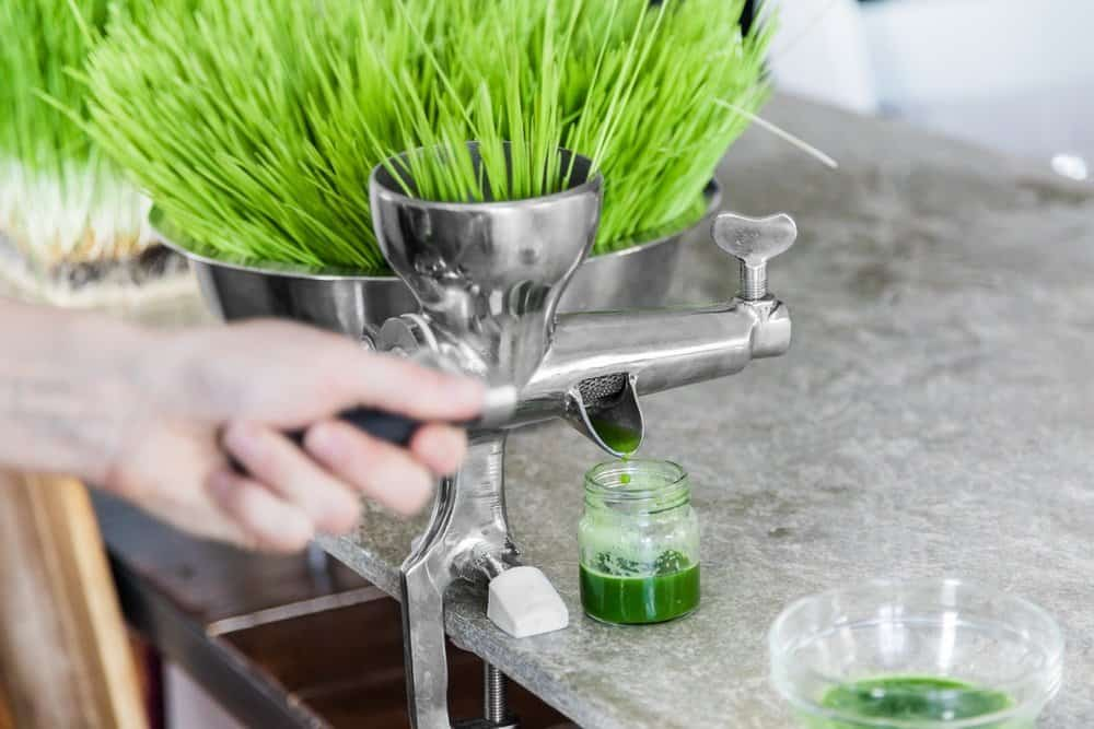 Extraction of Wheatgrass in Action on the Kitchen Countertop using a Metal Manual Juicer - Organifi Green Drink Review