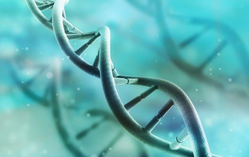 Genes dna structure - 10 Ways to Lose Belly Fat