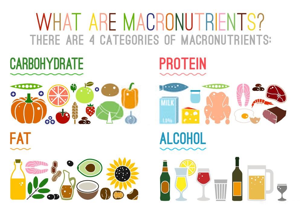 Main food groups macronutrients