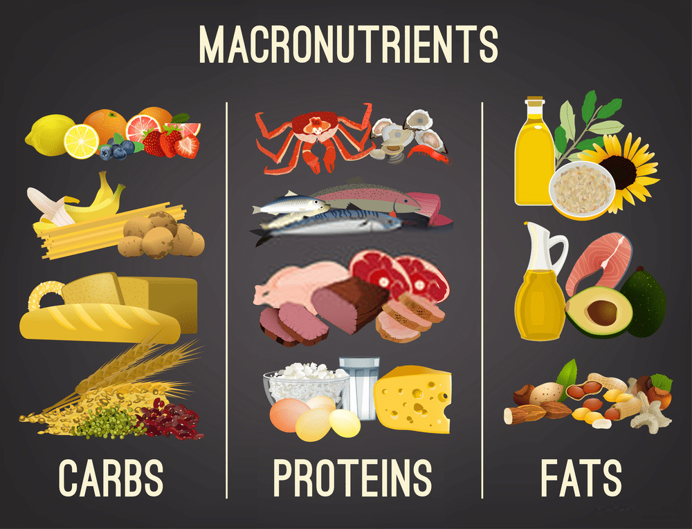 Main macronutrient food groups