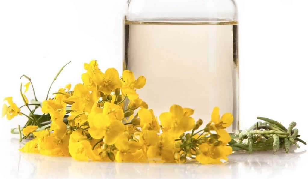 Ranking the best canola oil of 2020