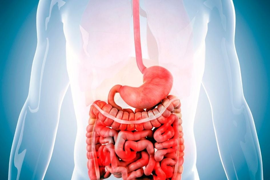 Characteristics of a healthy digestive system