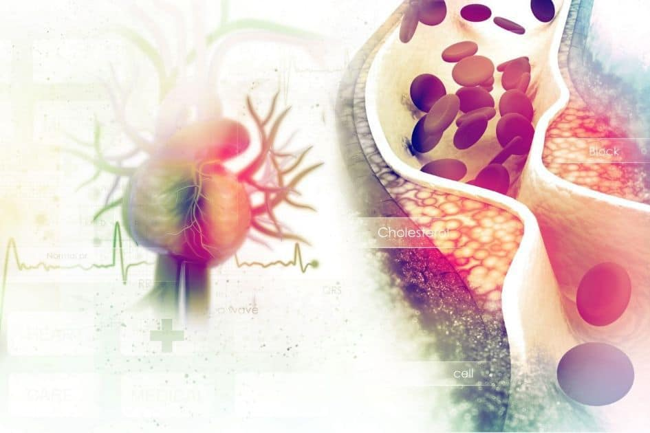 Conclusions about the cholesterol myth