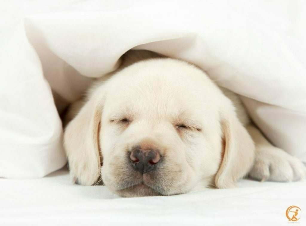 Sleeping is essential for productivity, vitality, and happiness — factors that promote longevity