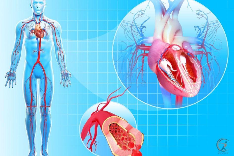Cardiovascular System - Proven Ways to Run Longer